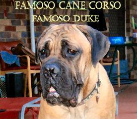 Famoso Duke
