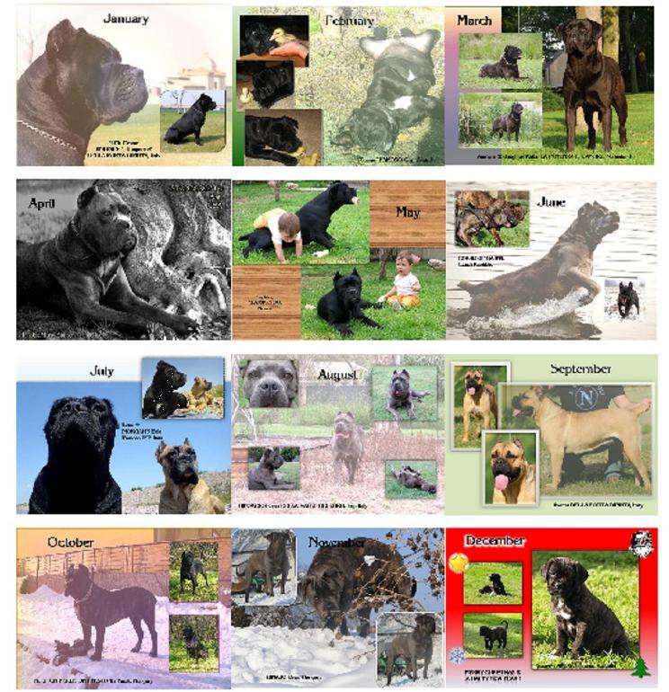 CC Calendar 2011 preview